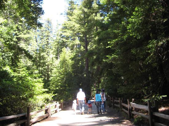 Big Basin Tent Cabins : walking through the forest