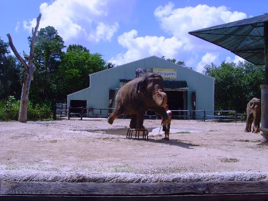 Elephant Encounter Picture Of Central Florida Zoo