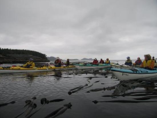 God's Pocket Resort: Kayaking nearby