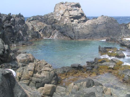 Buffam's Tropical Haven: The Natural Pool