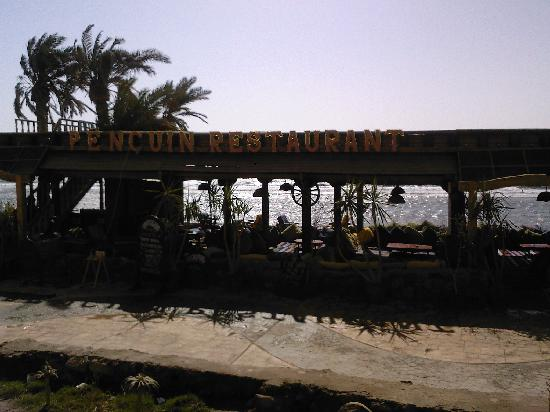 Penguin Village: The restaurant