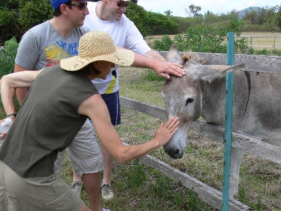 Guana Island: The owners donkey's for his families little ones