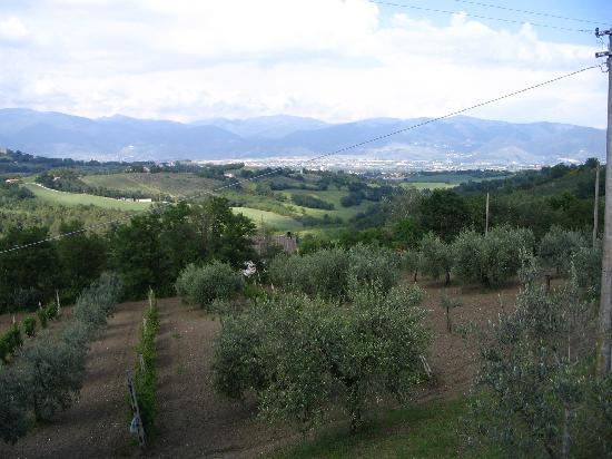 Casale Fusco : A View from the Grounds