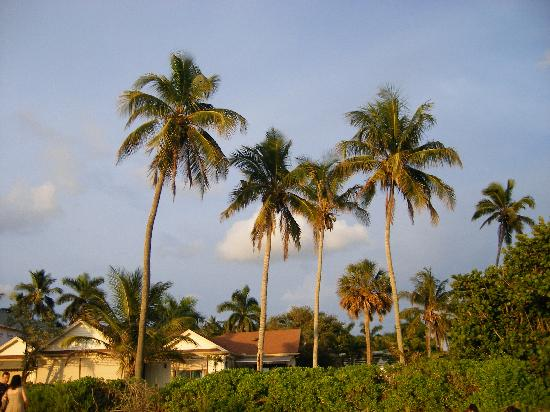 Neapol, Floryda: Palm trees at the beach