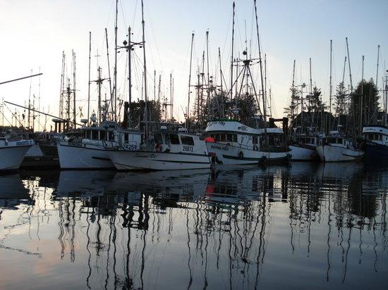 Tofino, Canada: marina at dusk