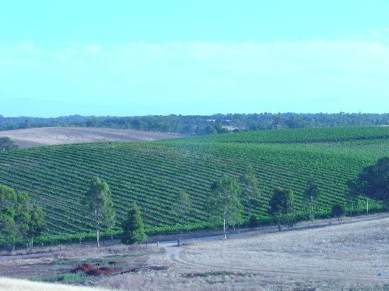 Lyndoch, Australia: view of Barossa