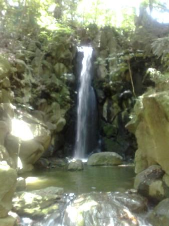 Naritasan Shinsho-ji Temple: out back natural waterfalls fill the ponds.