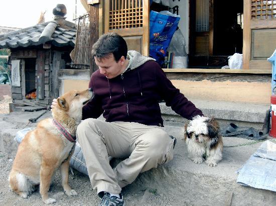 Sa Rang Chae Guesthouse: Playing with the Sa Rang Chae dogs