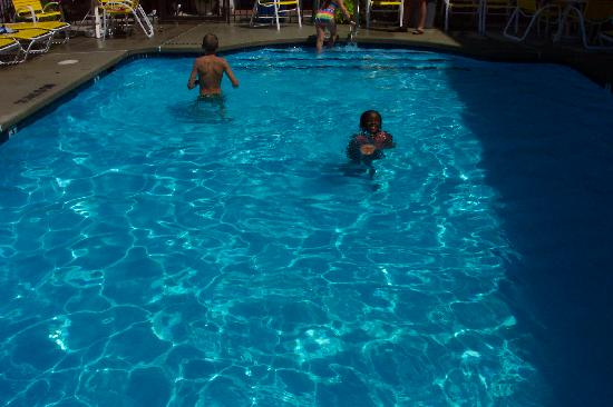 Sea Hawk Motel: The clear pool!!