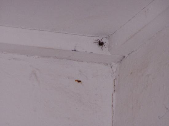 Hunter Valley Resort: Bathroom spiders