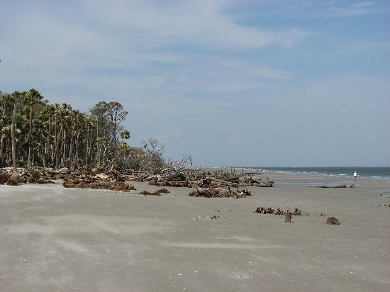 Hunting Island State Park: Looking north on the beach