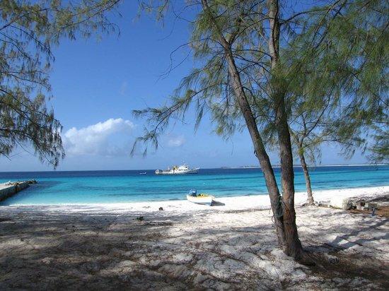 Carangue Ignobilis Photo De Seychelles Islands