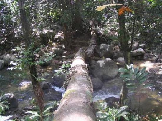 Langkawi's rainforest