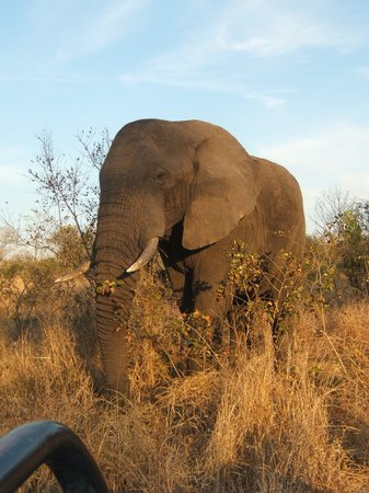 Sabi Sand Game Reserve, South Africa: elefante