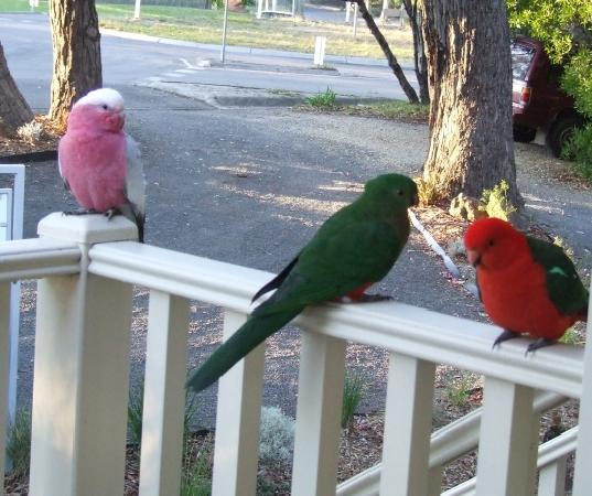 Around About Lorne: More morning visitors