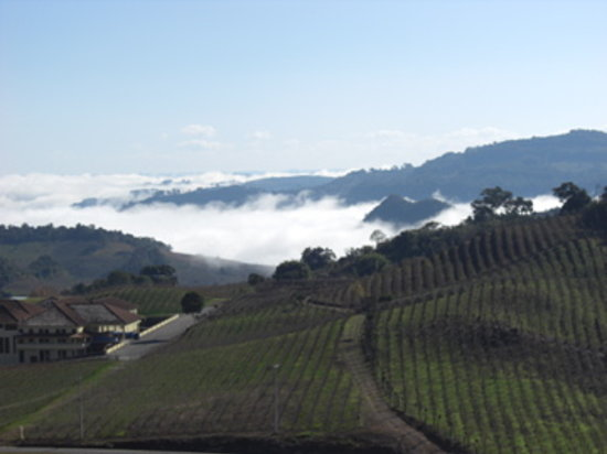 Hotel & Spa do Vinho, Autograph Collection: Morning View of Vineyards