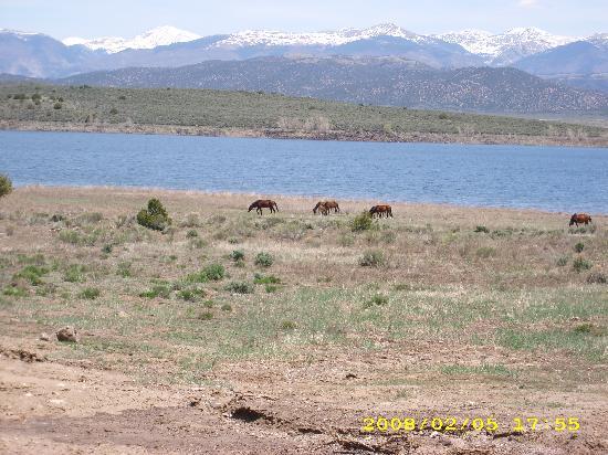 San Luis Inn Motel: wild horses still roam free near the Sanchez Reservoir (May 2008)