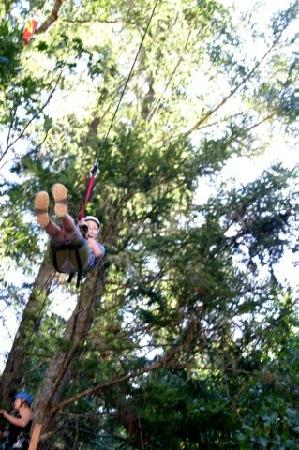 Out 'n' About Treehouse Treesort: Climbing the tree for the zip line!