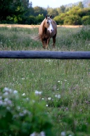 Out 'n' About Treehouse Treesort: Horse in the Pasture
