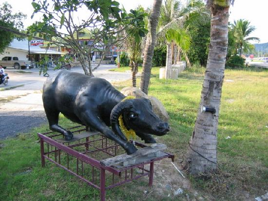 The Laem Din Hotel: A bull just outside of the hotel
