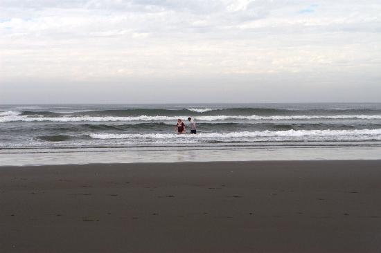 Grey Gull: Ocean