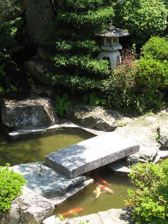 Ryokan Fujioto: the koi pond in the front garden