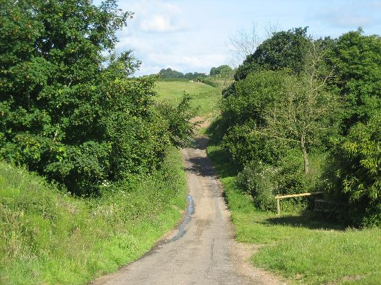 Feather Down Farms at Dolphinholme: the lane