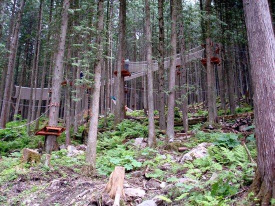 Skytrek Adventure Park: The course