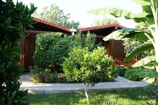 Garten  Garten - Rüya Pansiyon, Çıralı Resmi - TripAdvisor