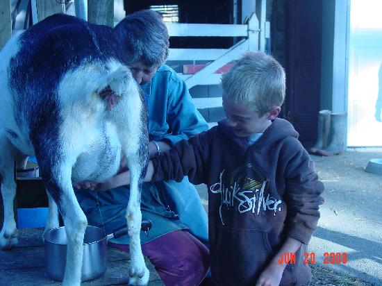 Olde Fogie Farm: Brandon milking the goat