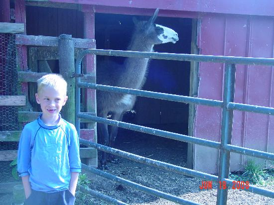 Olde Fogie Farm: Brandon & The kissing llama