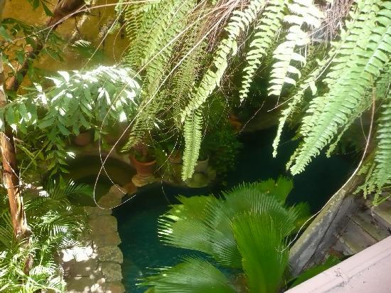 Casa Mexilio Guest House: La piscine en forme de cenote
