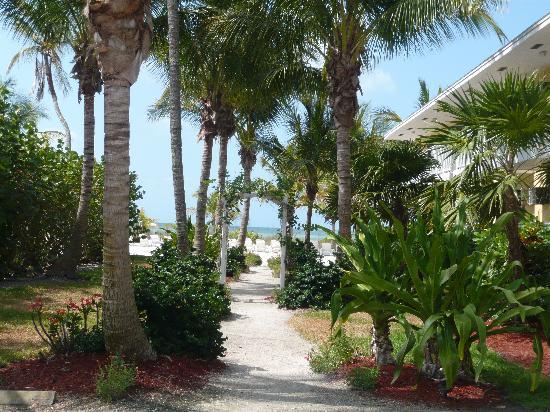 Waterside Inn on the Beach: Chemin vers la plage longeant le Pineapple