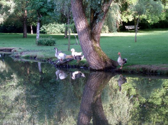 Chateau De Rigny : quelques animaux du parc