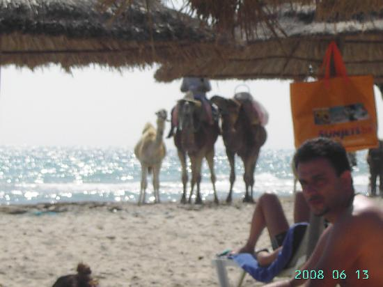 Djerba Holiday Beach: e tutto vero