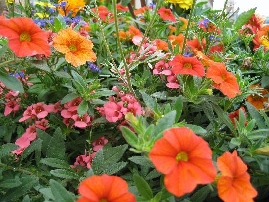 Stratford, Canadá: Glorious Street Flowers