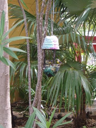 Tillett Gardens: Banana Quits
