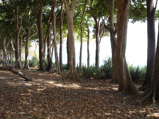 Barefoot at Havelock: Forest near Beach no 7