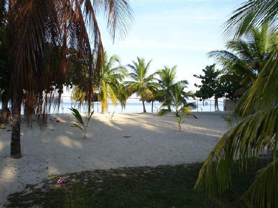 The Yellow Bird : beach view