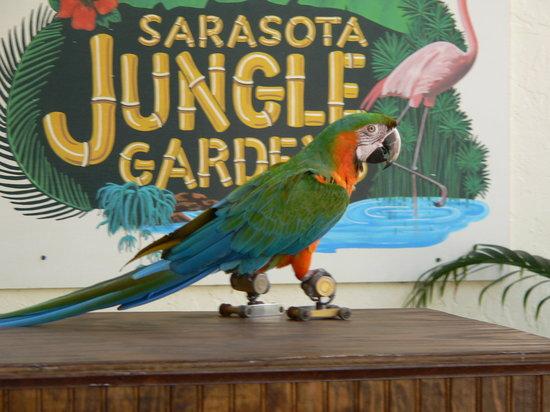 Sarasota Jungle Gardens: parrot show