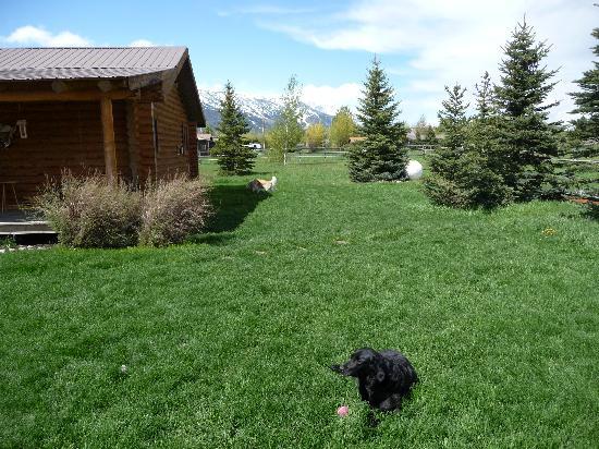 Sassy Moose Inn: Outside of Inn