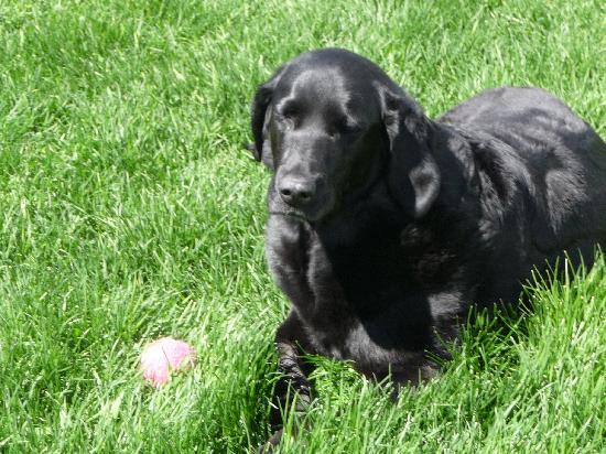 Sassy Moose Inn: Sweet resident dog