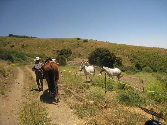Alpujarra Mountains: horses