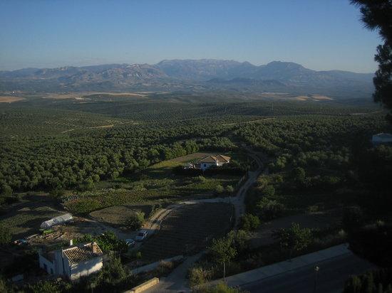 Ubeda, Espanha: Olivos