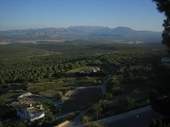 Úbeda, España: Olivos