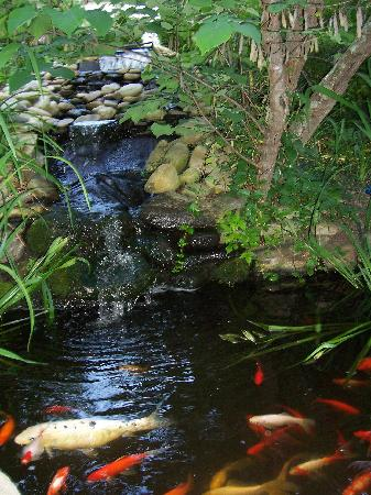 The Dry Ridge Inn: The Lovely Fishpond