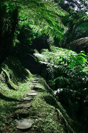 COMO Shambhala Estate: trail
