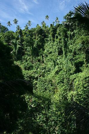 COMO Shambhala Estate : view on trails
