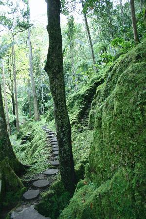 COMO Shambhala Estate : trail