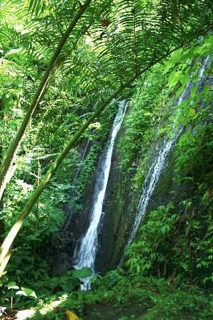 COMO Shambhala Estate: waterfall on trail
